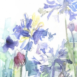 Agapanthus Study 2 – SOLD