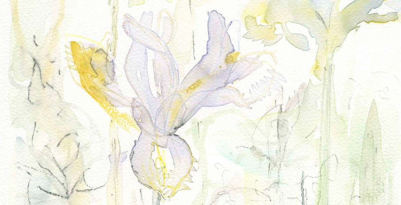 Iris Study 4