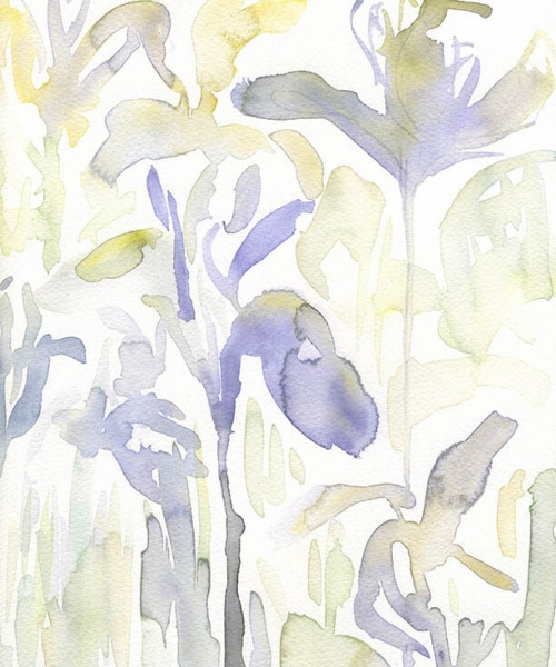 Iris Study 1