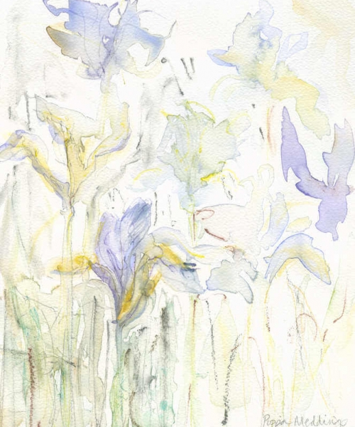 Iris Study 6