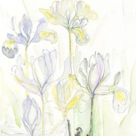 pippa meddings - iris study 8